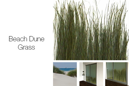 Beach Dune Grass Room Dividers